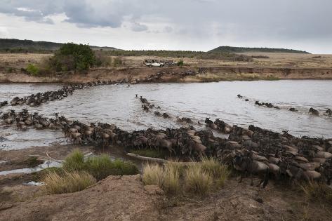 Wildebeest Crossing the River Mara Fotografie-Druck