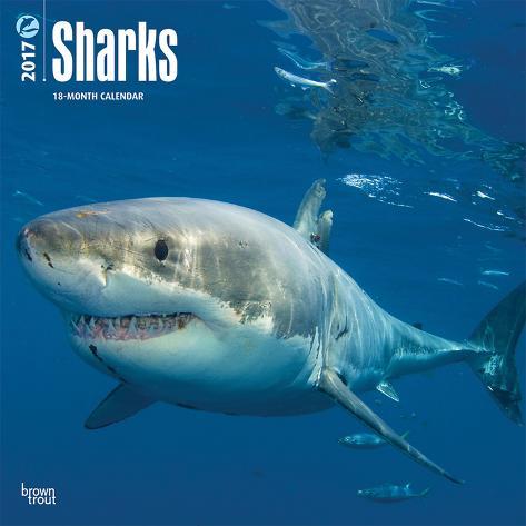 Sharks - 2017 Calendar Kalenders