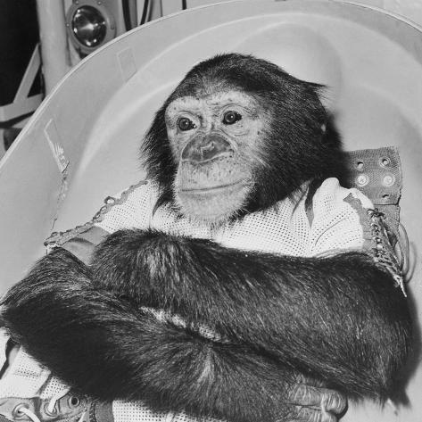 Space Travelling Monkey in Capsule Fotografie-Druck