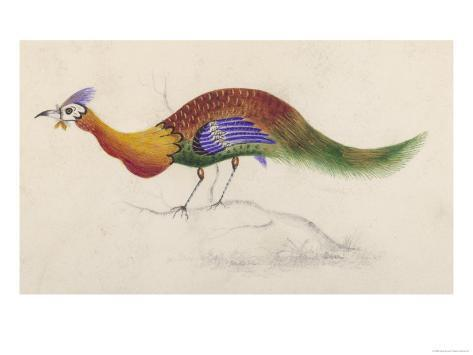 Strange Bird with Brightly Coloured Plumage Giclée-Druck