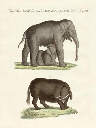 Strange Four-Footed Animals Giclée-Druck
