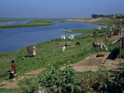 Latrines on the River Bank in Rough Land Grazed by Cows in a Slum in Dhaka, Bangladesh Fotografie-Druck