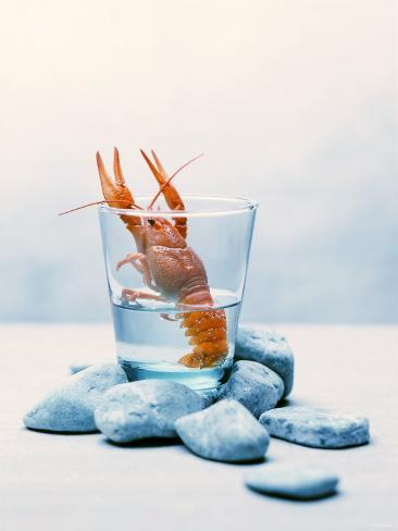 Freshwater Crayfish in a Glass of Water Fotografie-Druck