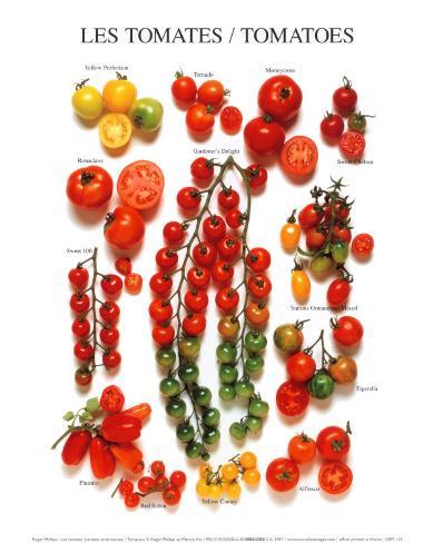 Tomaten Kunstdruck