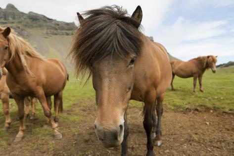 Horse Fotografie-Druck