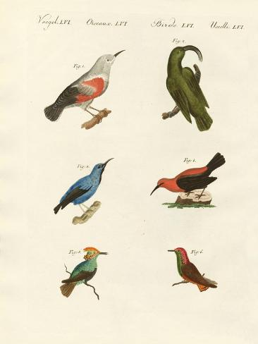 Treecreepers and Hummingbirds Giclée-Druck