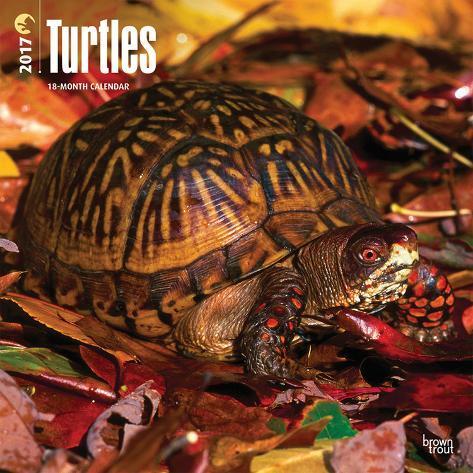 Turtles - 2017 Calendar Kalenders