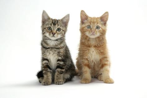 Two Kittens Fotografie-Druck