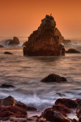 Cormorant and the Sonoma Coast Fotografie-Druck