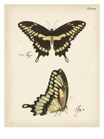 Butterfly Profile I Kunstdruck