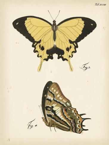 Butterfly Profile II Kunstdruck