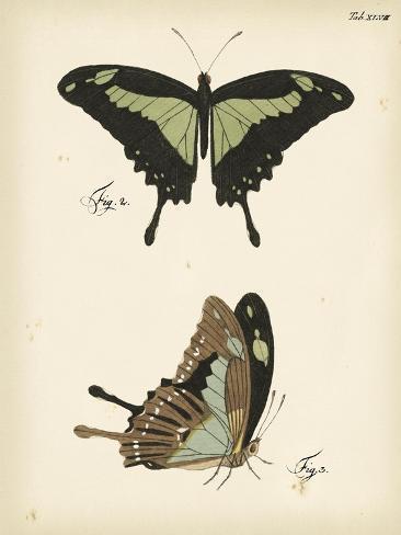 Butterfly Profile III Kunstdruck