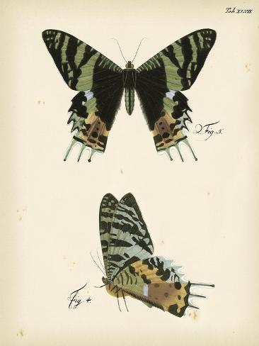 Butterfly Profile IV Kunstdruck