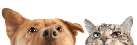 Dog and Cat up and close on the Camera Fotografie-Druck