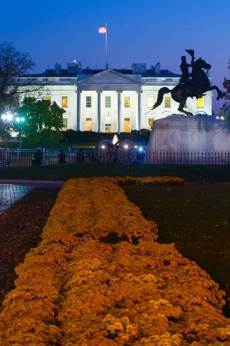 White House with flowers at dusk, Washington DC, USA Fotografie-Druck