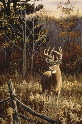 Autumn Whitetail Giclée-Druck