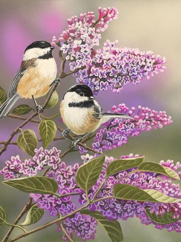 Lilacs and Chickadees Giclée-Druck