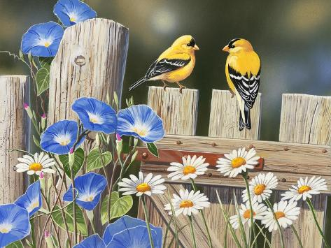 Morning Glories and Finches Giclée-Druck