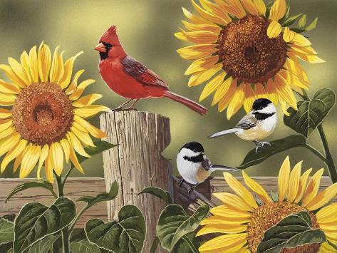 Sunflowers and Songbirds Giclée-Druck