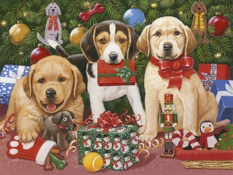 Which One's Mine? Xmas Puppies Giclée-Druck