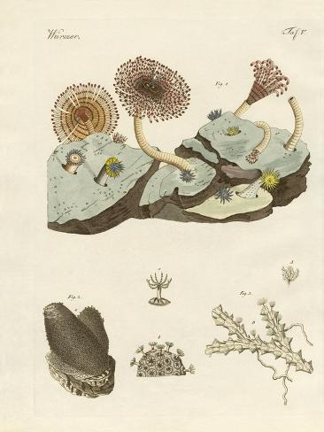 Zoophytes and Animal Plants Giclée-Druck