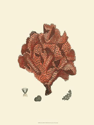 赤サンゴ(N)IV アートプリント