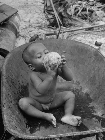 2 Year Old Drinking Coconut Photographic Print