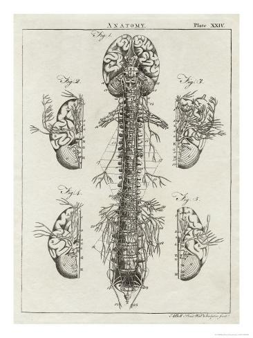 Brain and Spinal Column Giclee Print
