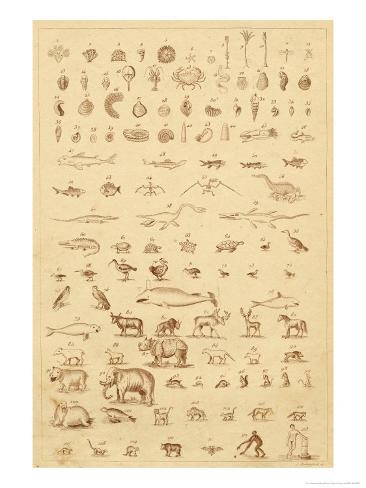 The Progress of Evolution from Amoebas to You and Me as Displayed by the Fossil Record Giclee Print