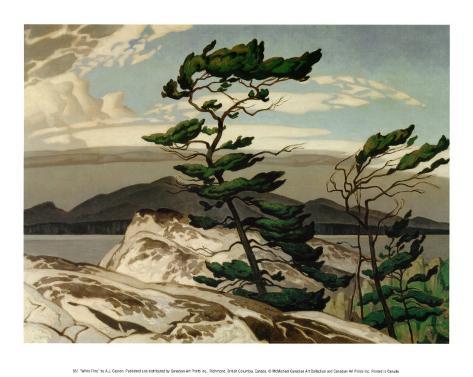 White Pine Art Print