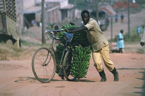 A Man Carrying Bananas by Bike, Uganda, Fort Portal Giclee Print