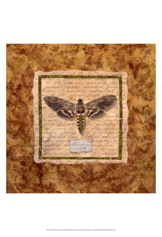 Manduca Moth Art Print