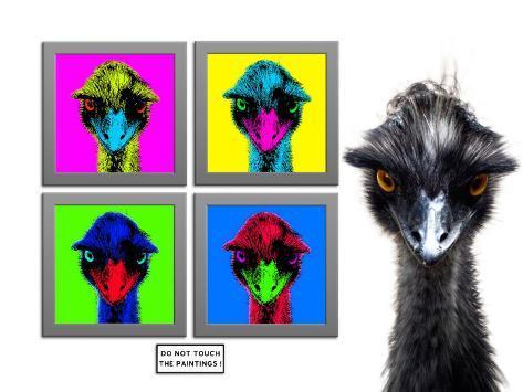 Staring Emus Photographic Print