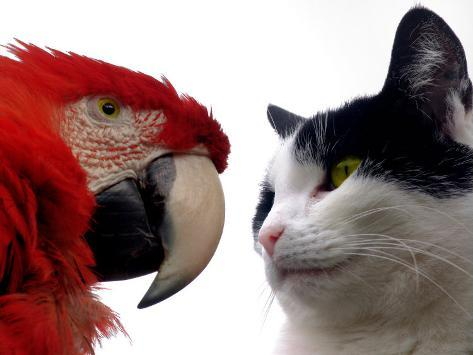 The Parrot and the Cat Photographic Print
