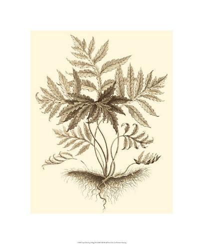 Sepia Munting Foliage IV Premium Giclee Print