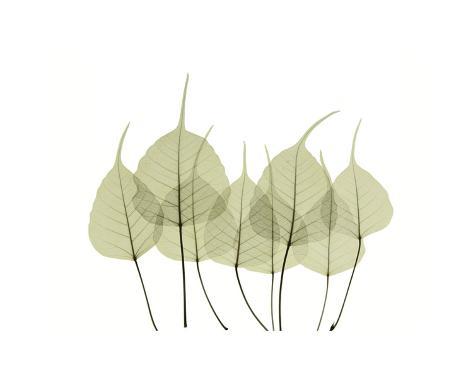 Woodlands I Giclee Print