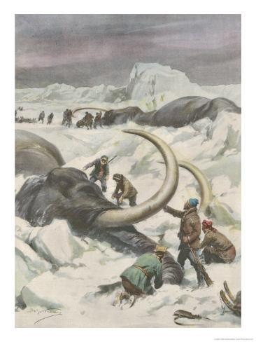 Two Mammoths are Found Frozen in the Jamalm Peninsula 2400 Kilometres North of Saint Petersburg Giclee Print