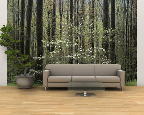 Flowering Dogwood Tree, Great Smoky Mountains National Park, Tennessee, USA Wall Mural – Large