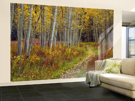 Footpath Through Autumn Aspen Trees, San Isabel National Forest, Colorado, Usa Wall Mural – Large