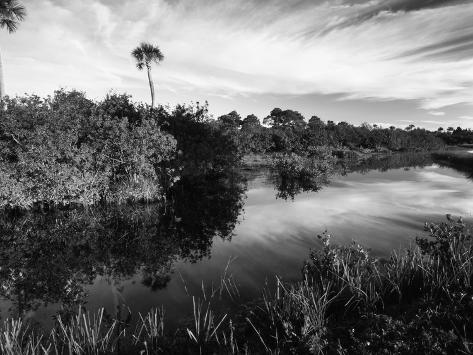 Mangrove Wetland Habitat, Merritt Island National Wildlife Refuge, Florida, USA Photographic Print
