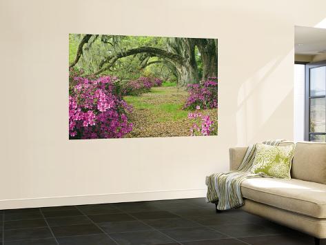 Oak Trees Above Azaleas in Bloom, Magnolia Plantation, Near Charleston, South Carolina, USA Wall Mural
