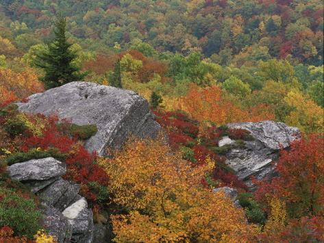 Rocky Outcrop and Autumn Colors, Blue Ridge Parkway, North Carolina, USA Valokuvavedos