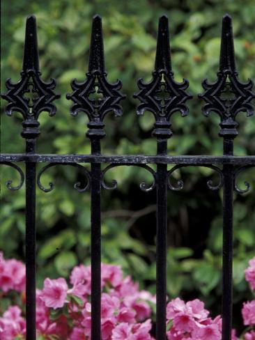 Wrought Iron Gate with Azaleas, Charleston, South Carolina, USA Photographic Print