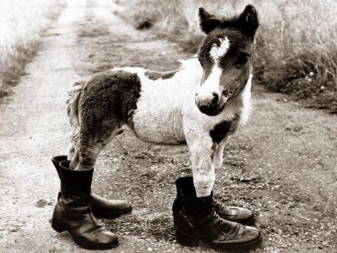 Adult Horse with Giant Boots Photographic Print