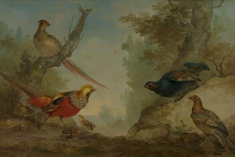 Pheasants Art Print