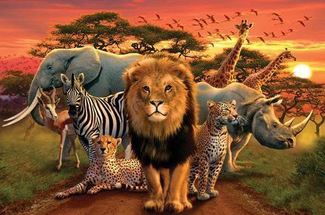 African Kingdom Póster