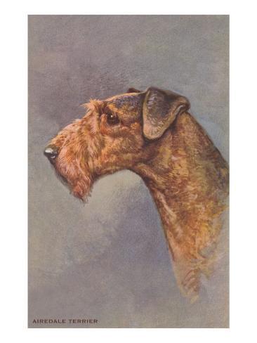 Airedale Terrier Art Print