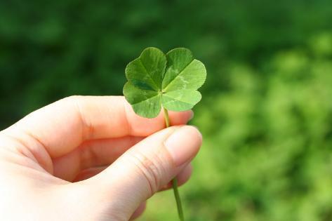 オールポスターズの aki s palette four leaf clover 写真プリント