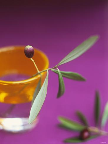 Olive Sprig with Olive in a Glass Photographic Print
