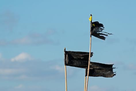 Black Flags Photographic Print